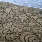 111219-playa painting- mussels